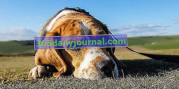 Upozorni znakovi raka kod pasa koji zaslužuju vašu pažnju