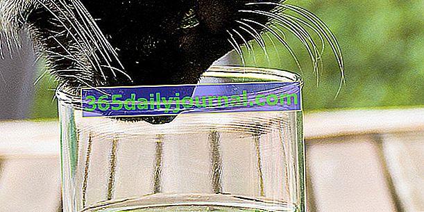 Zapach kotów: wszystko wiedzieć, wszystko rozumieć