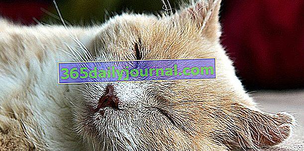 Skąd mam wiedzieć, czy mój kot jest chory? 10 objawów, na które należy uważać