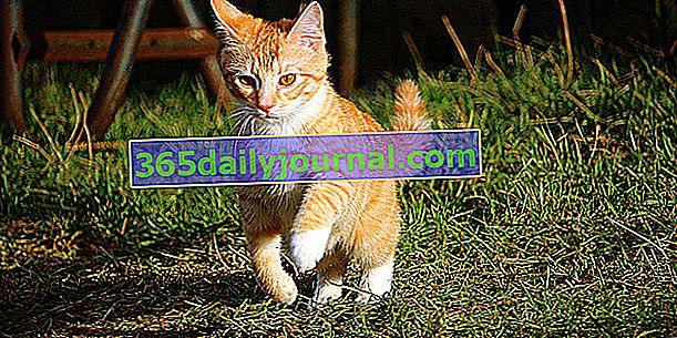 Kaputi, haljine i boje kod mačaka: kompletna datoteka!