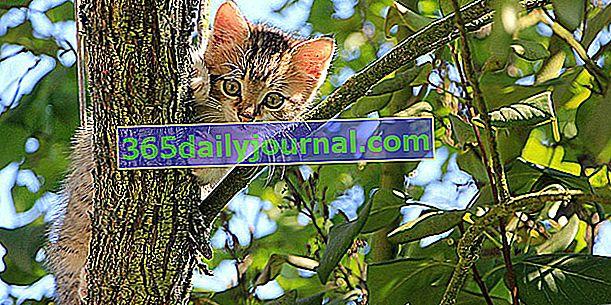 Jak przyzwyczaić kociaka do wychodzenia z domu bez odsuwania się i ucieczki?