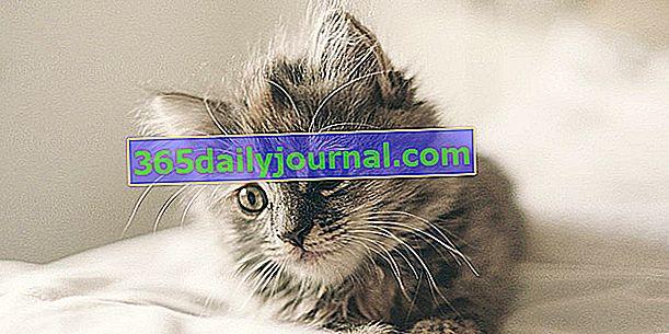 Первичная вакцинация котят: в каком возрасте? Какие вакцины?