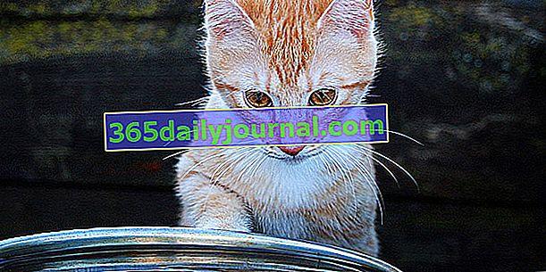 Кои породи котки обичат водата?