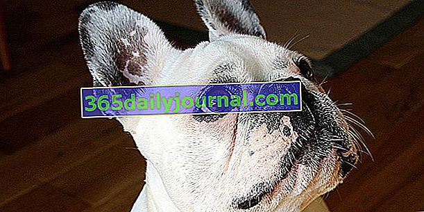 Identificación del perro: ¿chip o tatuaje? ¿Es obligatorio?