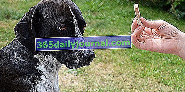 Jak používat klikr se svým psem: metoda tréninku klikru