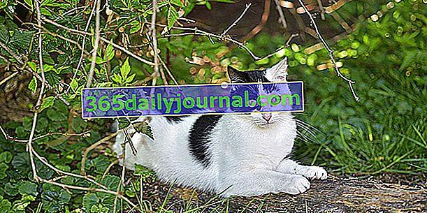 Odkdy byla kočka domestikována? Trochu historie kočky
