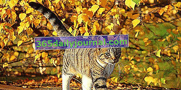 Котка избягала: защо, как да намалим риска от бягство?