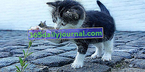 Educación para gatitos: las 6 mejores cosas para enseñarle a tu gato