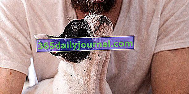 Žárlivost u psů: jak to napravit?