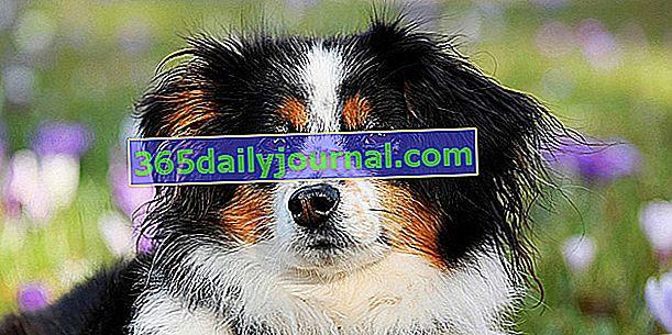 Ubezpieczenie psa: jak wybrać? Jaka stawka za ubezpieczenie wzajemne?