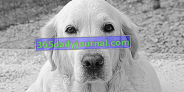 Евтаназия на кучето му: защо, как протича?