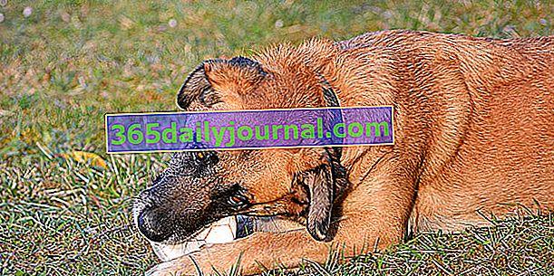 Adopcja dorosłego psa ze schroniska: wskazówki dotyczące udanego przyjęcia