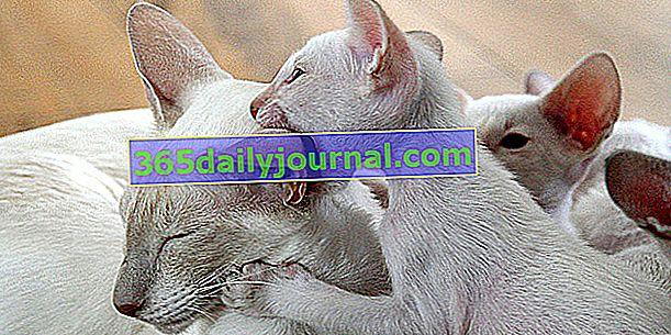 Какви са професиите, свързани с котките?