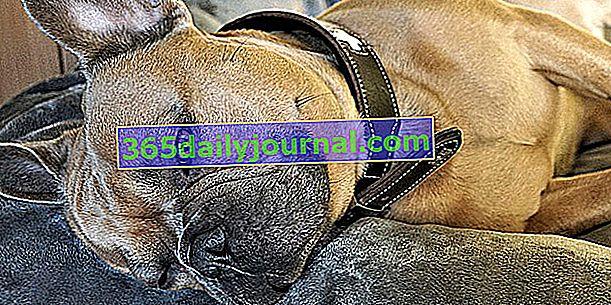 Močové kameny u psů: příčiny, příznaky a léčba