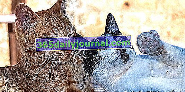 Няколко котки у дома: съвети за добро съжителство