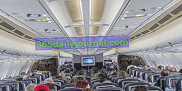 Samolotem z psem: porady i przepisy