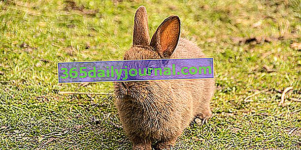 ¿Cuál es la esperanza de vida de un conejo?