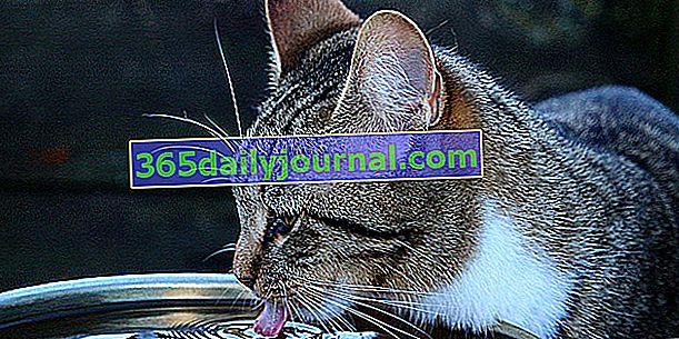Jaké jsou potřeby kočky na vodu? Naše rady