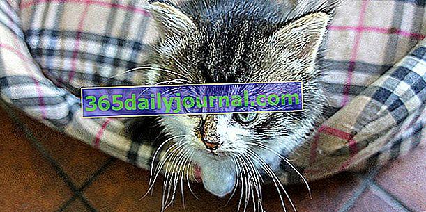 10 základních doplňků pro kočky