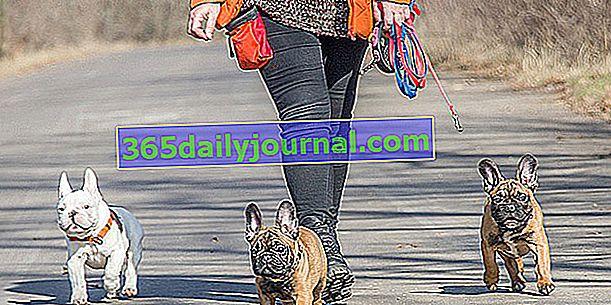 ¿Cómo enseñarle a tu perro a caminar sin correa?