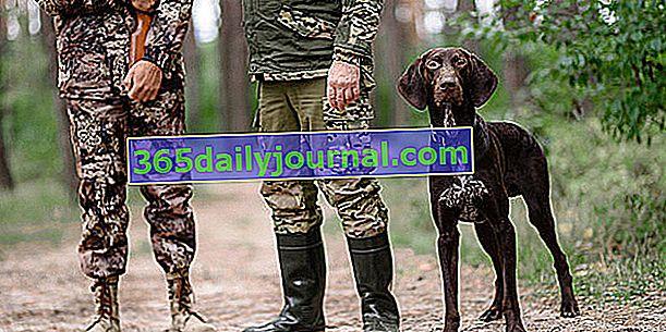 Seguro para perros de caza