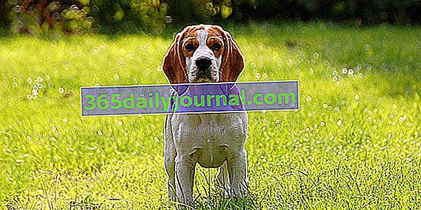 Страхування собак зі 100% покриттям ветеринарних витрат
