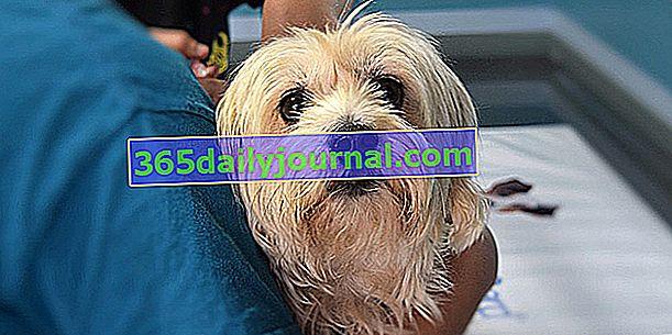Protiv kojih bolesti se pas može cijepiti?