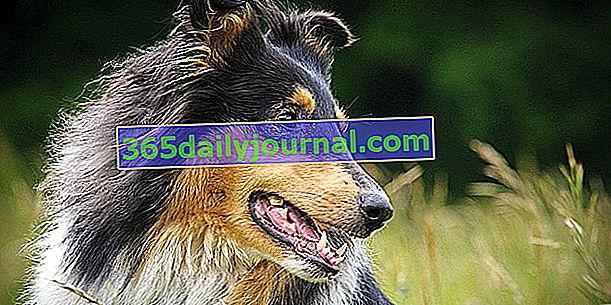 Citat za osiguranje pasa: kako ga tražiti i dešifrirati?
