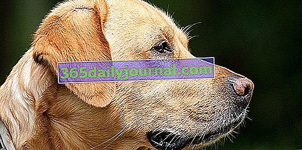 Ima li pasmina psa utjecaja na cijenu osiguranja?