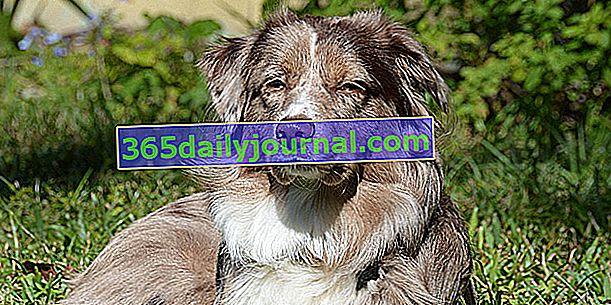 Jaký je preventivní balíček pro pojištění psů?