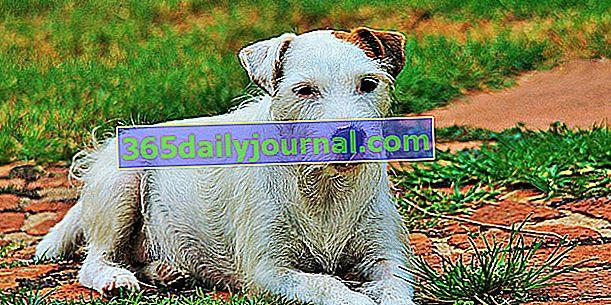 Egzema u psów: przyczyny, objawy i zapobieganie