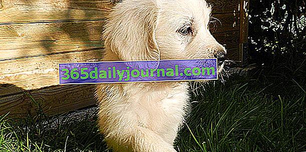 Wycena ubezpieczenia psa: jak ją zamówić i przeczytać?