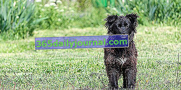 Ubezpieczenie psa z maksymalnie refundowaną opieką