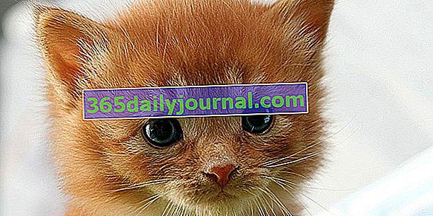Котенца да се дават: къде, кога, как?