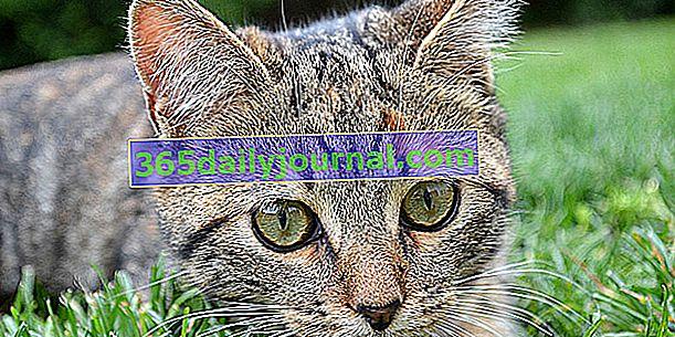 ¿Qué repelentes naturales para gatos?