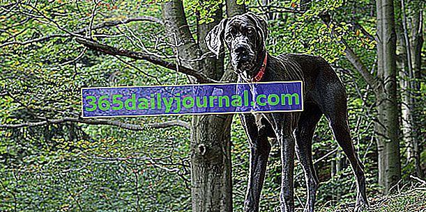 Osteosarcoma en perros: causa, síntoma y tratamiento