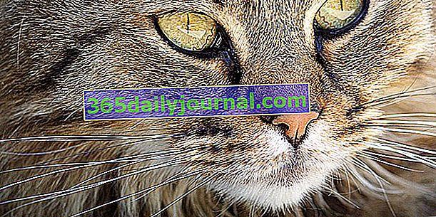 Las 9 vidas del gato: ¡la verdadera historia de esta leyenda!