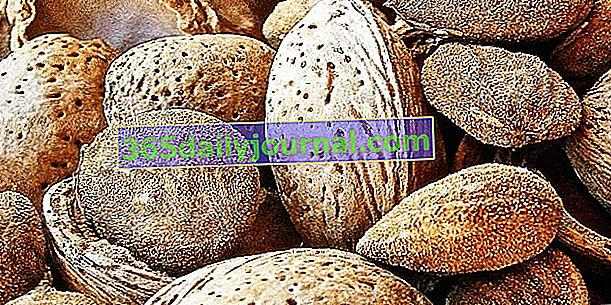 Migdały: zbiór, konserwacja i wykorzystanie migdałów