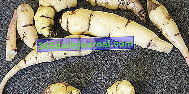 Gomoljasta nasturcija (Tropaeolum tuberosum), okusen gomolj