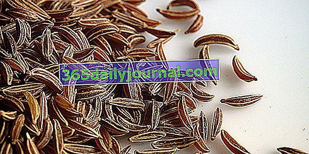 Alcaravea (Carum carvi), comino de pradera o anís de los Vosgos