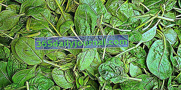 Špinat (Spinacia oleracea), povrće bogato željezom?