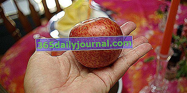 Marelica-šljiva ili Pluot, voće iz hibridne kreacije