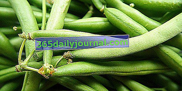 Judía verde (Phaseolus vulgaris), judía enana o en fila