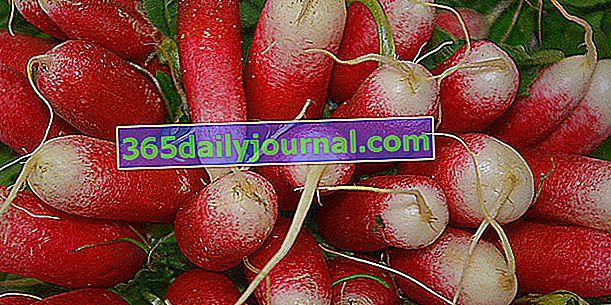 Rábano rosado (Raphanus sativus), para aprender a cultivar un huerto