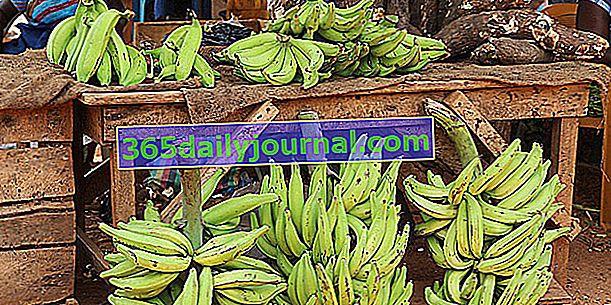 Живовляк банан (Musa x Paradisiaca) за готвене като зеленчук