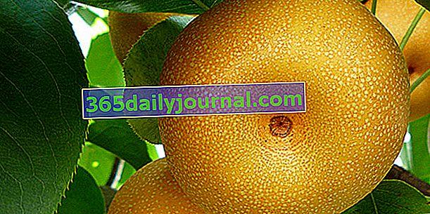Nashi (Pyrus pyrifolia) o manzana-pera