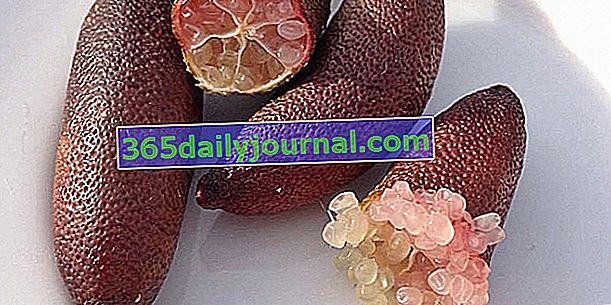 Kawior cytrynowy (Citrus australasica), trend szefów kuchni