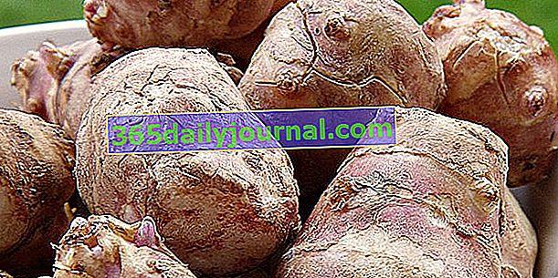Topinambur (Helianthus tuberosus) zelenina s artyčokovou príchuťou