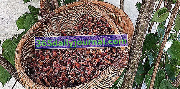 Avellanas: cosecha, almacenamiento y uso de avellanas