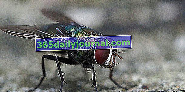 ¿Cómo hacer una trampa para moscas?
